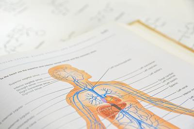 医師が教える自律神経とヨガとの関わり